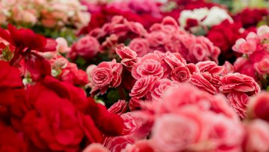 Photo of 5 Red Colored Flowers That Speaks Volumes Of True Love