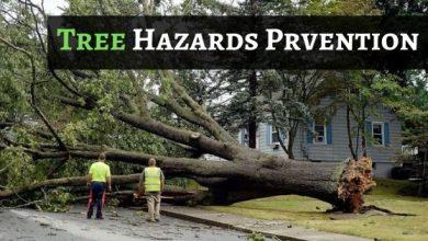 Photo of How To Determine & Prevent Tree Hazards?