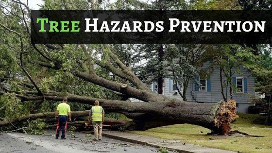 Tree Hazards Prevention