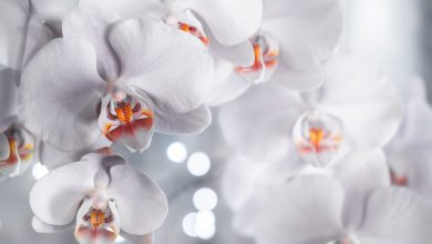 Photo of What Makes Orchids A Great Gifting Option?