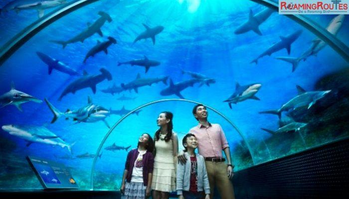 Underwater Zoo with Sea Aquarium