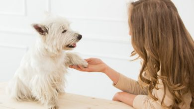 Photo of How Can Businesses Deal with Pet Care Benefit from Online Listing Websites?