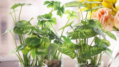 Photo of SILK PLANTS FOR OUTDOOR USE: IMPORTANT FACTS