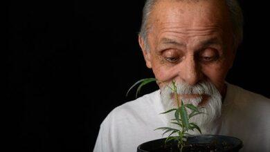 Photo of MEDICAL MARIJUANA FOR ELDERLY PATIENTS