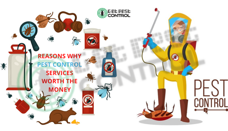 Top Reasons Why Pest Control Services Worth The Money