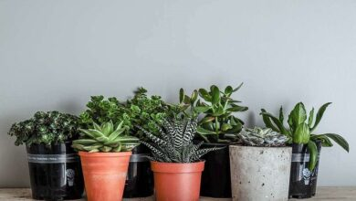 "Photo of 5 ways to use artificial plants to add the ""wow"" factor to your home decor"
