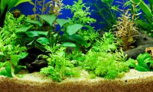 Is Sand useful for bettas