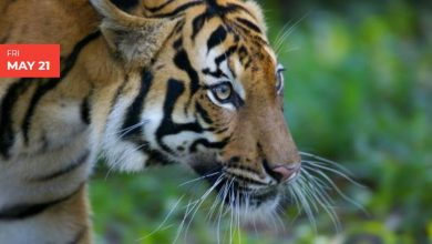 Photo of Every Thing You Should Know About NATIONAL ENDANGERED SPECIES DAY