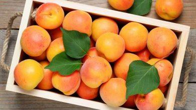 Photo of Is Apricot Good For Skin Health?