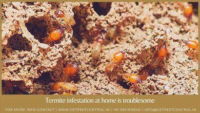 Photo of Why having termite infestation at home is troublesome