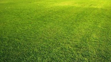 Photo of Best Times for Lawn Care Maintenance by Balaji Nursery