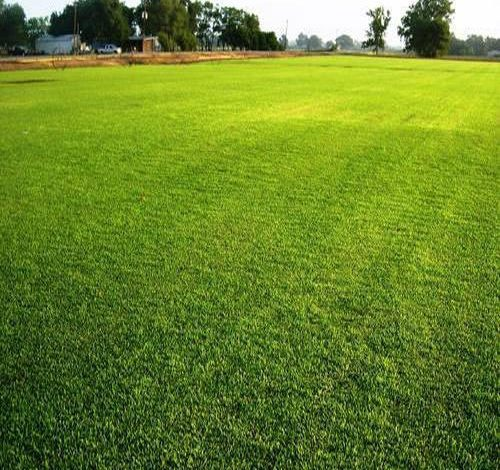 Best Times for Lawn Care Maintenance