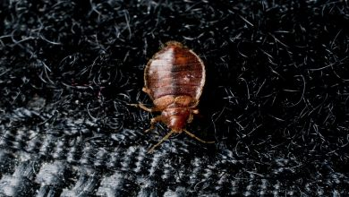 Photo of What Advantages You Can Get by Hiring a Professional Service for Bed Bugs Treatment?