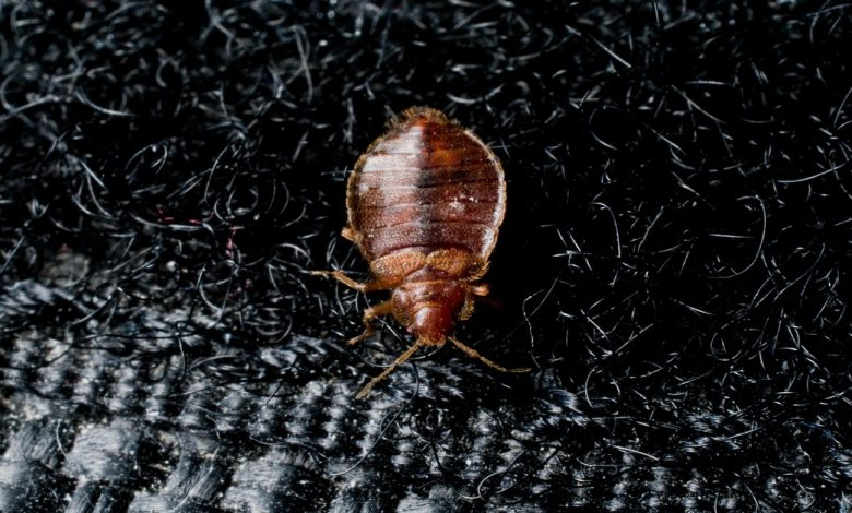 Bed Bugs Treatment in Upper Darby - Featured Image