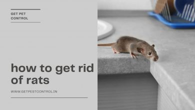 Photo of Effective ways to keep rat infestation at bay