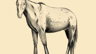 Photo of How to draw a horse