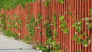 Photo of 3 Benefits Of Using Wood Fence